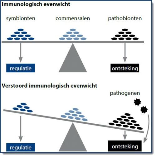 Figuur 1: immunologisch evenwicht