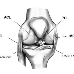 Front Leg Ligament Diagram Lumbar Nerve Root Arthroscopic Acl Uw Orthopaedics And Sports Medicine Seattle Figure 1a Drawing Of A Right Knee As Viewed From The