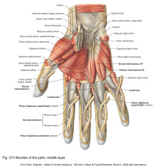 Hand Muscles Diagram Directv Hr44 Wireless Wiring Applied Anatomy Of The Wrist Thumb And