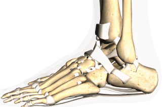 No decay in subjective function found 10 years after surgery for unstable ankle fracture