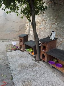 Le nuove cucce vintage tutte in legno – Fonte: Archivio Civinini