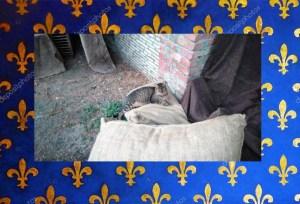 Spillo adagiato su un sacco del mercato – Foto: Colonia Felina del Castello Santa Severa