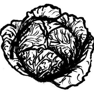 ricette a base di verza