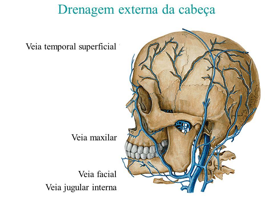 Musculos superficiais da facetronco e dos membros superiores e inferiores 3