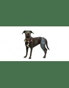Prodotti ortopedici per cani Zampe posteriori
