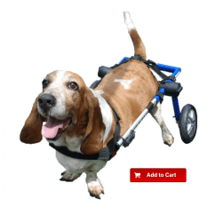 Wheel Chairs For Dogs Folding Sleeper Chair Foam How To Choose The Best Wheelchair Our Dog Ortocanis Com Can Lose Mobility In Their Hind Legs Various Reasons Ranging From Traumatic Causes Like Spine Or Hip Fractures Degenerative Illnesses That May