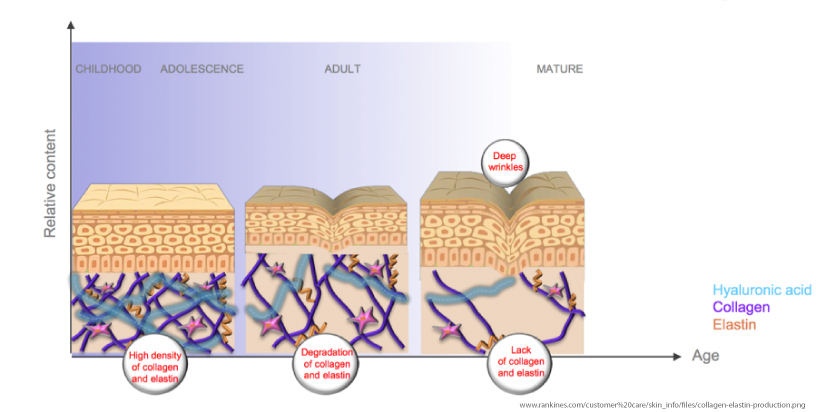What is the role of collagen and elastin and do these type ...
