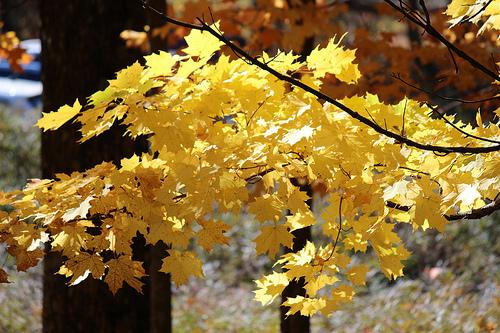 ミネワスカ州立公園(Minnewaska State Park)- ニューヨークの日帰り紅葉スポット