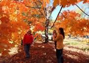 セントラルパークで紅葉を味わおう