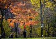 紅葉が美しい秋のプロスペクトパークをお散歩