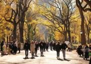 秋のセントラルパークおすすめお散歩ルート