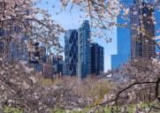 セントラルパークの桜(2018年)