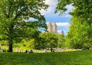 緑溢れる初夏のセントラルパーク