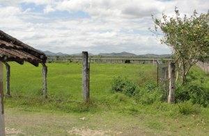 O campo do Santa Luiza está abandonado e cheio de mato  no gramado