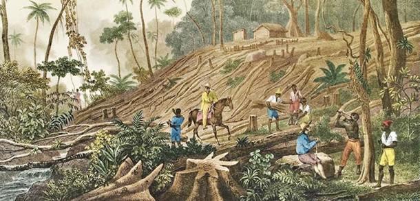 Na litografia de Rugendas, o desmatamento da mata atlântica abre espaço para atividades agrícolas, especialmente café.