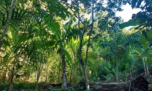 Agricultura e proteção ambiental