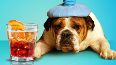 Рецепти за коктейли против махмурлук и главоболие