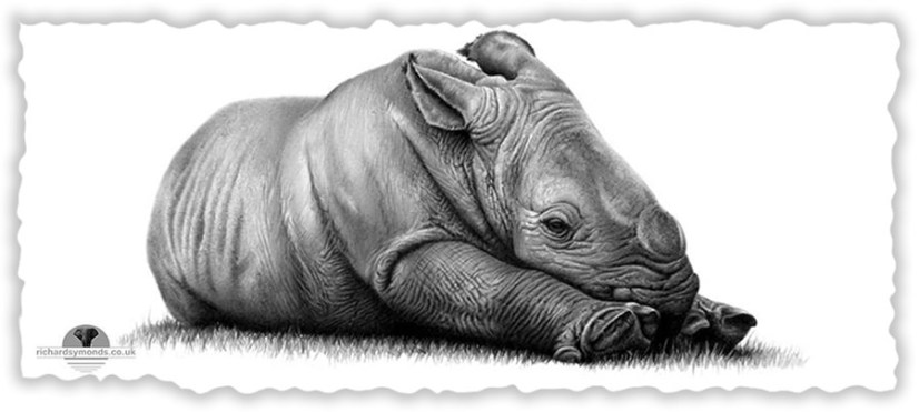 factors that encourages rhino poaching Poaching crisis in south africa for up to date rhino poaching figures, please visit our poaching - the statistics page the south african situation (a version of this article was originally published in the horn, spring 2011.