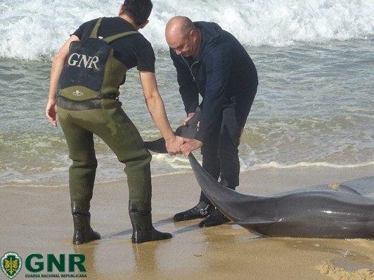 A operação de resgate do golfinho demorou duas horas