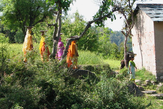 Ladies in coloured sarees walking in the fields