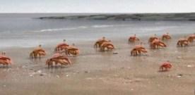 Crabs United