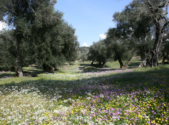 River of flowers in Arillas