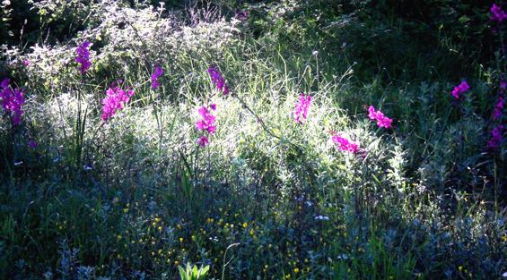 16 early morning wildflowers Corfu