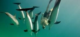 Swim with Dolphins in Bimini