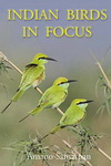 Indian Birds in Focus