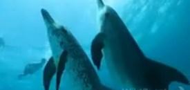 Bimini Dolphin Tales