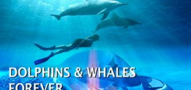 Dolphins and Whales Forever