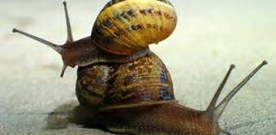 Mrs. and Mrs. Snail