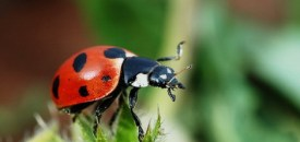 Animals And Insects Can Predict Natural Disasters And Diseases