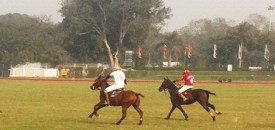 Discovering Polo and the Polo Crowd