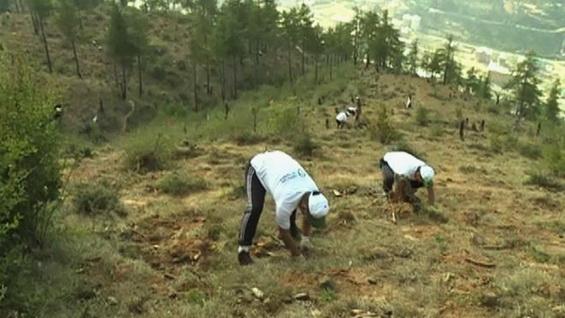 Bhutan tree planting