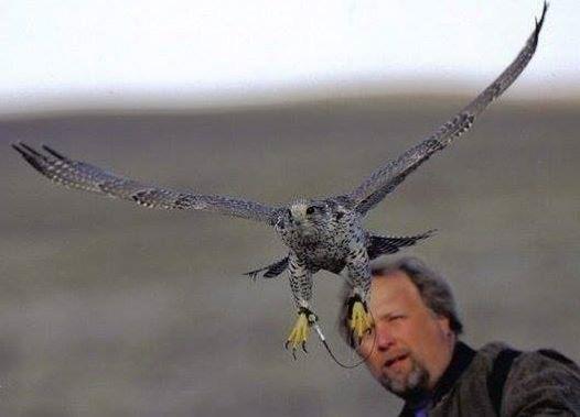 Prabhakar with falcon