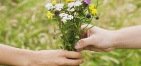 The Neuroscience of Gratitude