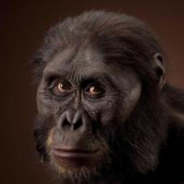 Ape and human