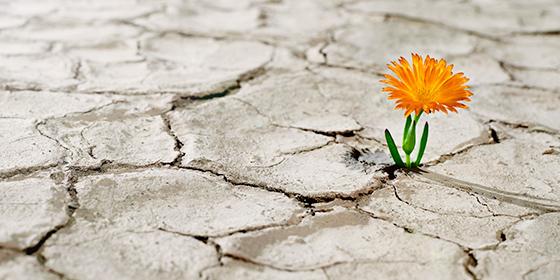 flower growing on dry soil