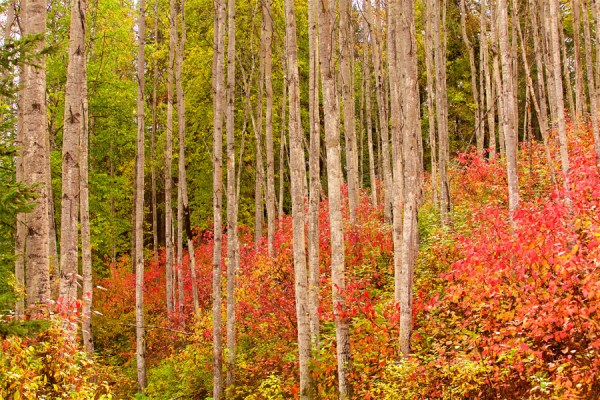 Autumn-AllanForest_03