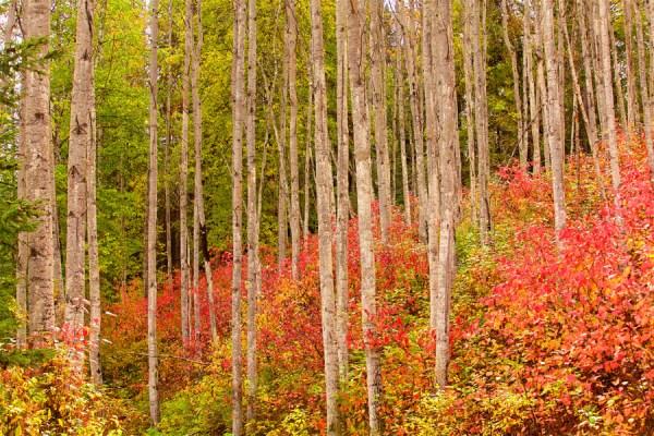 Autumn-AllanForest_03