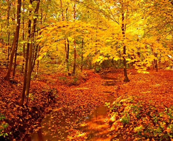 Autumn-AllanForest_05
