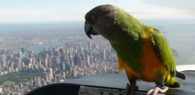 Parrot en-route