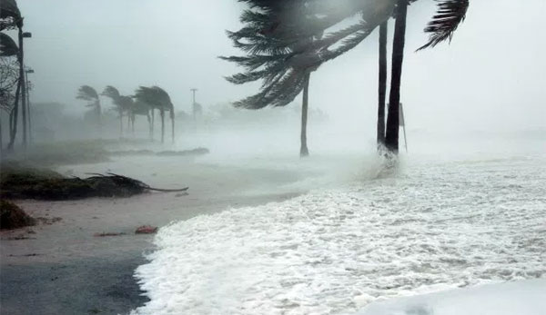 sea and palm trees in strom