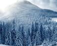 Inside the fir forest
