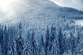 sun on snowy forest
