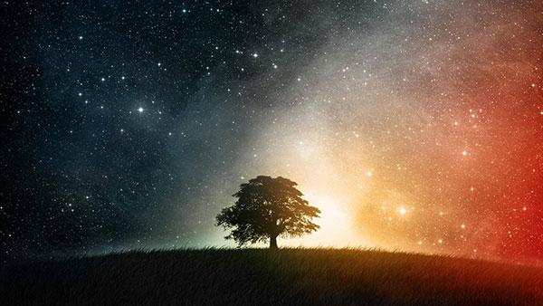 tree in stars