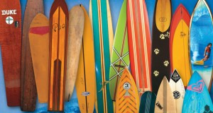 365 surfboards