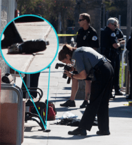 An Oceanside Field Evidence Tech takes a photo of a gun near the bench where the altercation began