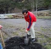 Plantación de castiñeiros